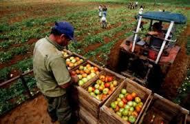 20150708071800-agricultura.jpg